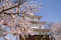 香川の桜【名所と穴場】2015│オススメスポットの見頃はいつ?