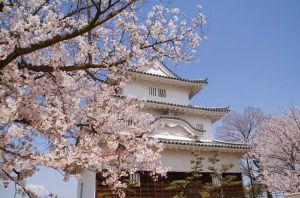 四国香川花見桜スポットオススメ2015