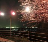 山口の2015桜情報!ライトアップされる名所はどこ?