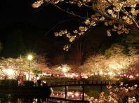 千葉の桜のライトアップは?デートにおすすめの名所ならここ!