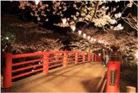 千葉の桜の見頃はいつまで?オススメスポット2015開花情報