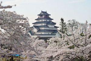 福島桜オススメ名所穴場花見スポット2015