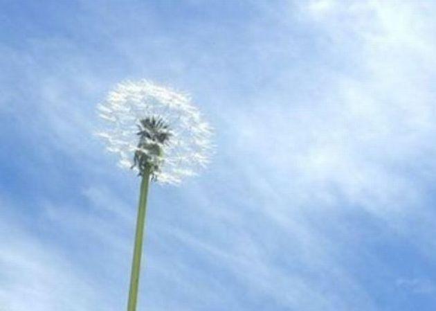 春一番とは?定義はなに?気象庁の基準は風速何m?春二番や春三番は?