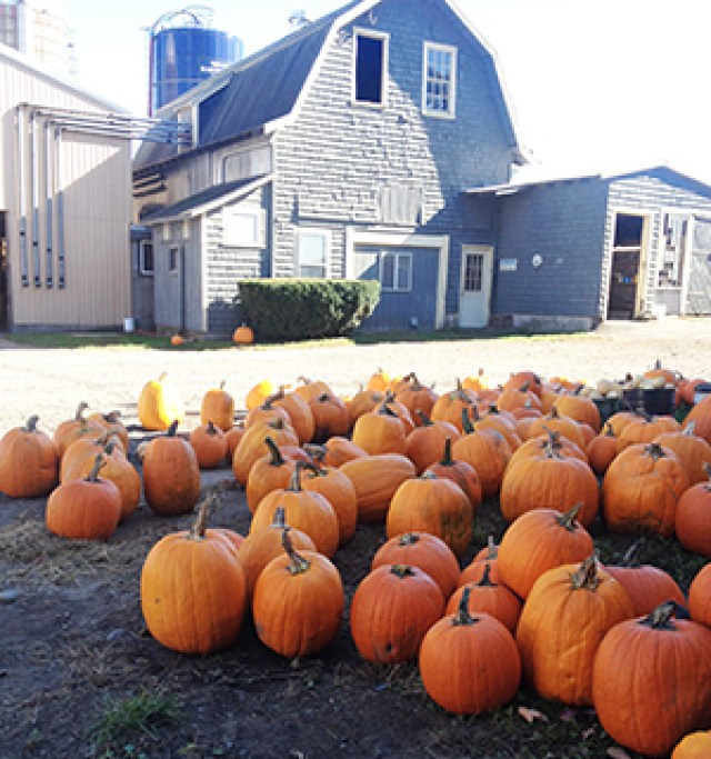 farm.pumpkins.2013.sm_