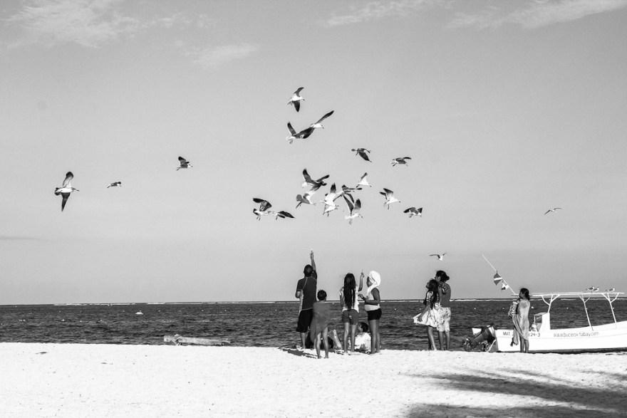 Möwenfütterung, Puerto Morelo, Mexiko 2014 (c) Christoph Pankowski