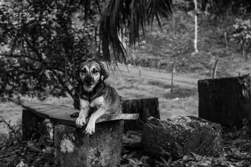 Hundeporträt, Costa Rica (c) Veronika C. Dräxler