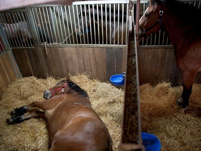 Денники для лошадей своими руками 49