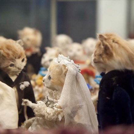 morbid-anatomy-museum-walter-potter-kitten-wedding-jd-powe-gowanus-brooklyn-nyc-2