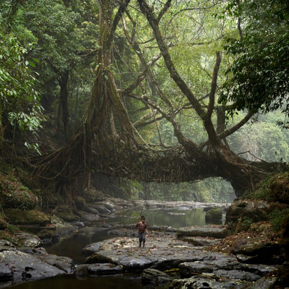 A young fisherman walks under the ancient tree root bridge at Mawlynnong village. (© Amos Chapple)