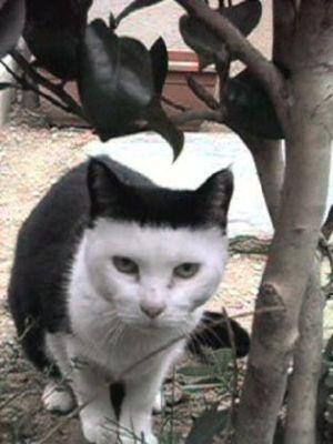 面白いネコ画像下さい!