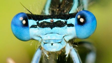 White-legged Damselfly by Philipp Weigell
