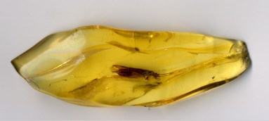 Amber Insect Fossil