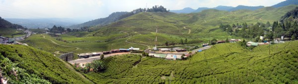 Wisata Alam, Kebun Raya Bogor ~ Alvindwiputra.id