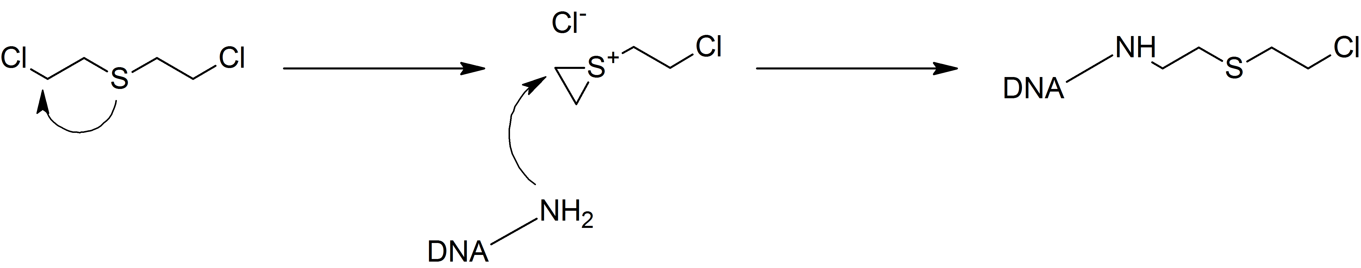 sulfur mustard mustard gas The sulfur mustards, or sulphur mustards, [2] commonly known as mustard gas, are a class of related cytotoxic and vesicant chemical warfare agents with the ability to form large blisters on the exposed skin and in the lungs.