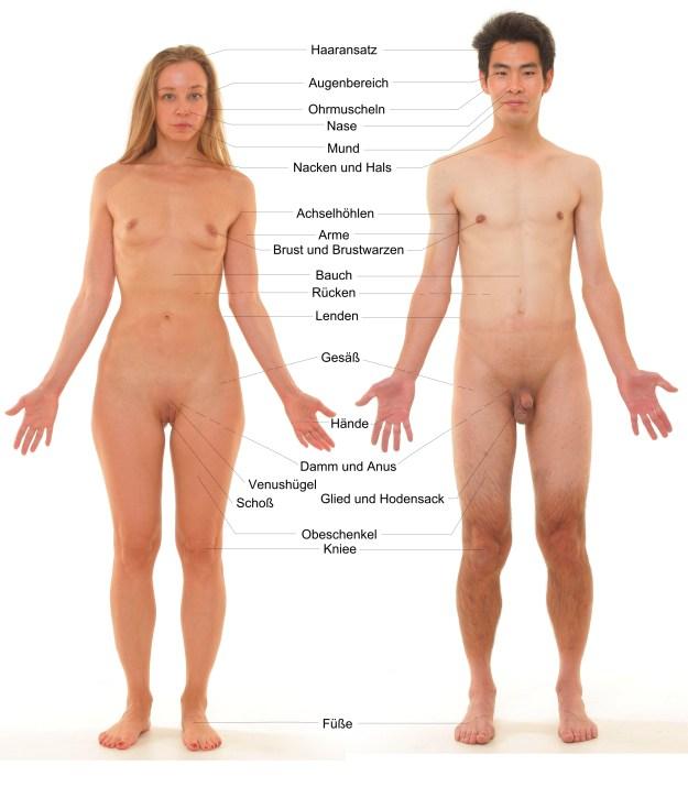Sexgott Tipps für errogene Zonen zur sexuellen Erregung