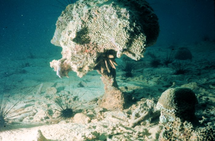 File:Coral-reef-bioerosion.jpg