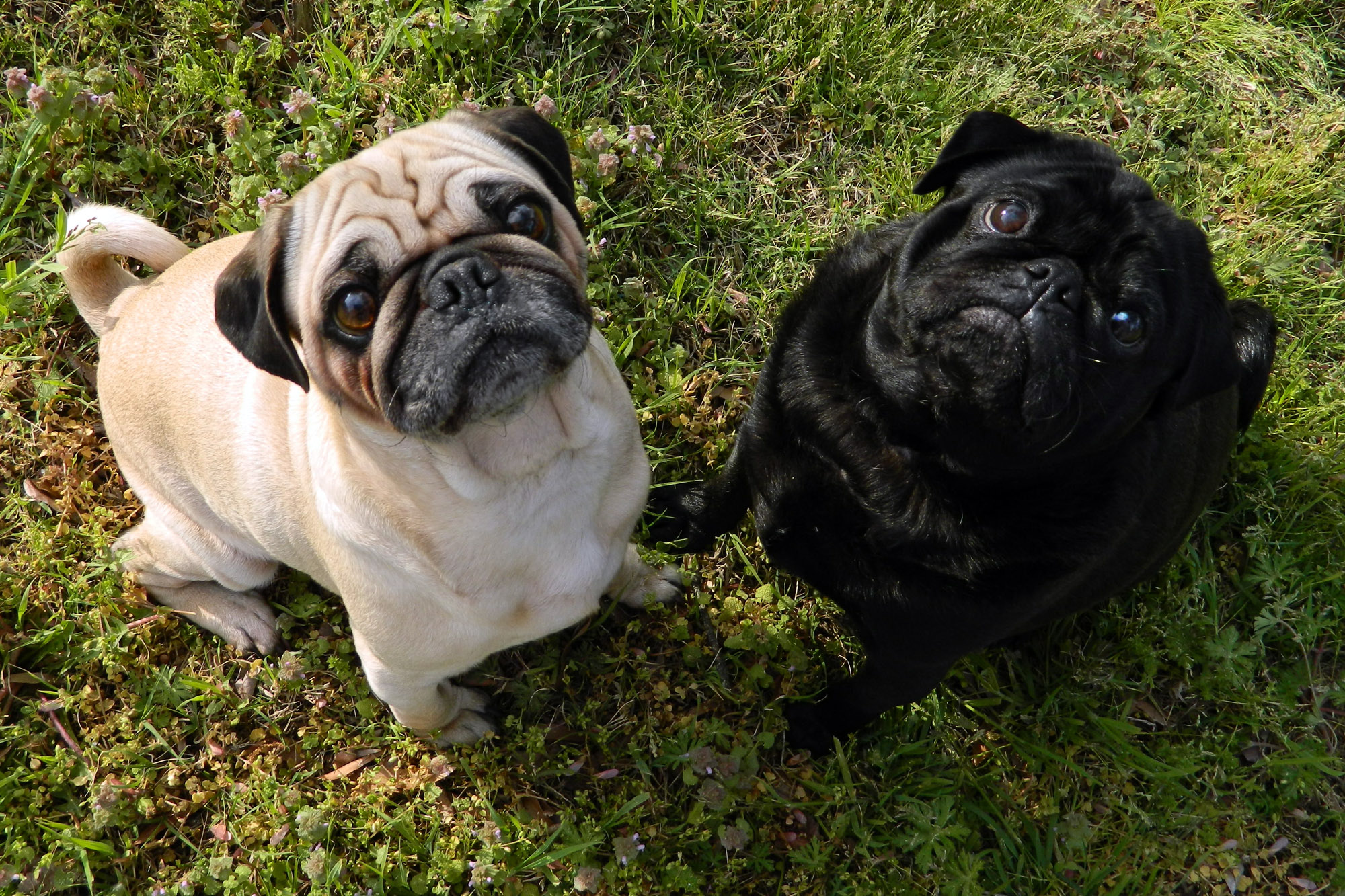 Double Be Black Dog Breeds Beginning At English Springer Spaniel St Dog Breeds Around World Entertainmentaroundworld Dog Breeds That Start bark post Dog Breeds That Start With B