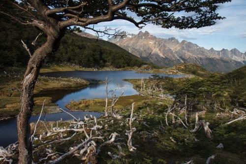 Medium Of Tierra Y Fuego