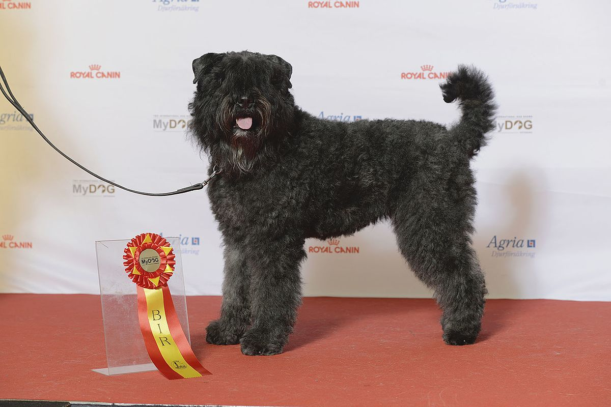 Fullsize Of American Dog Breeds
