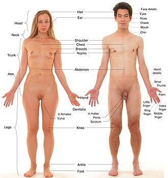 male female intercourse