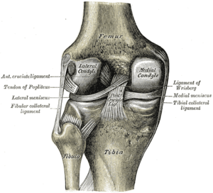 Anatomy of knee pain causes