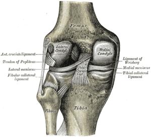 Anatomy of knee pain causes