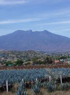 250px Agave fields mountain La tequila   « l'or bleu » mexicain (avec modération !)  Vidéo