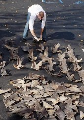 File:Shark fins.jpg