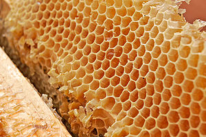 Honey comb02