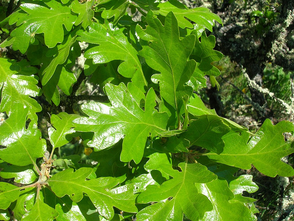 Fullsize Of Dark Oak Sapling Wont Grow