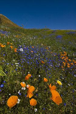 Lake Elsinore, California - Wikipedia