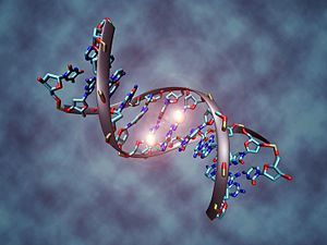 English: This image shows a DNA molecule that ...