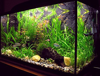 small amateur aquarium ? tank for 100 liters. (Photo credit