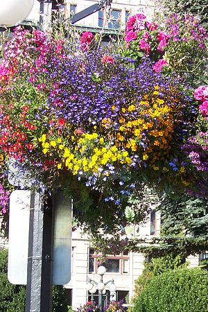 A hanging flower basket on the street lamppost...
