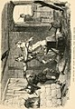 File:The Phynodderree, and other legends of the Isle of Man (1882) (14730259696).jpg - Wikipedia