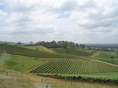 Hunter Valley vineyards.