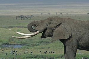 Taken in the Ngorongoro crater, Tanzania