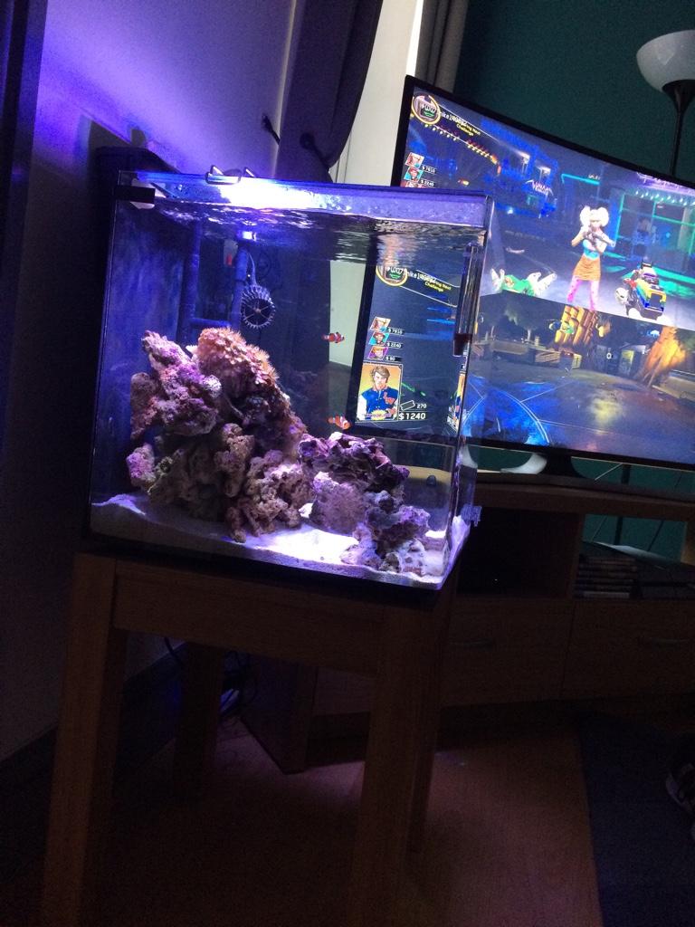 Fullsize Of Aquarium Safe Paint