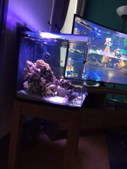 Small Of Aquarium Safe Paint