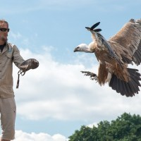 Flying with the eagles at Kintzheim castle
