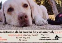 SEMINARIO AL OTRO EXTREMO DE LA CORREO HAY UN ANIMAL Y ERES TÚ! FORMACIÓN ON LINE