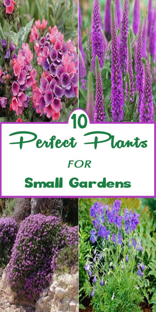 10 Perfect Plants for Small Gardens 2