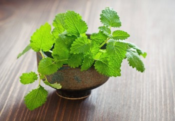 9-Herbs-That-Regrow4-350x242
