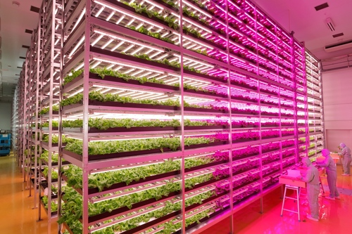 The farm uses 17,500 LED lights spread over 18 cultivation racks reaching 15 levels high.