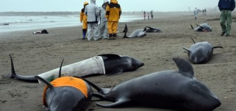 Over 130 Dolphins Beached In Japan