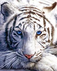 Dilhani Heemba, un'autrice promettente ha come avatar una Tigre