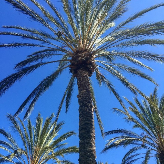 Yet another perfect day in sunny San Diego palmtrees sunnyhellip