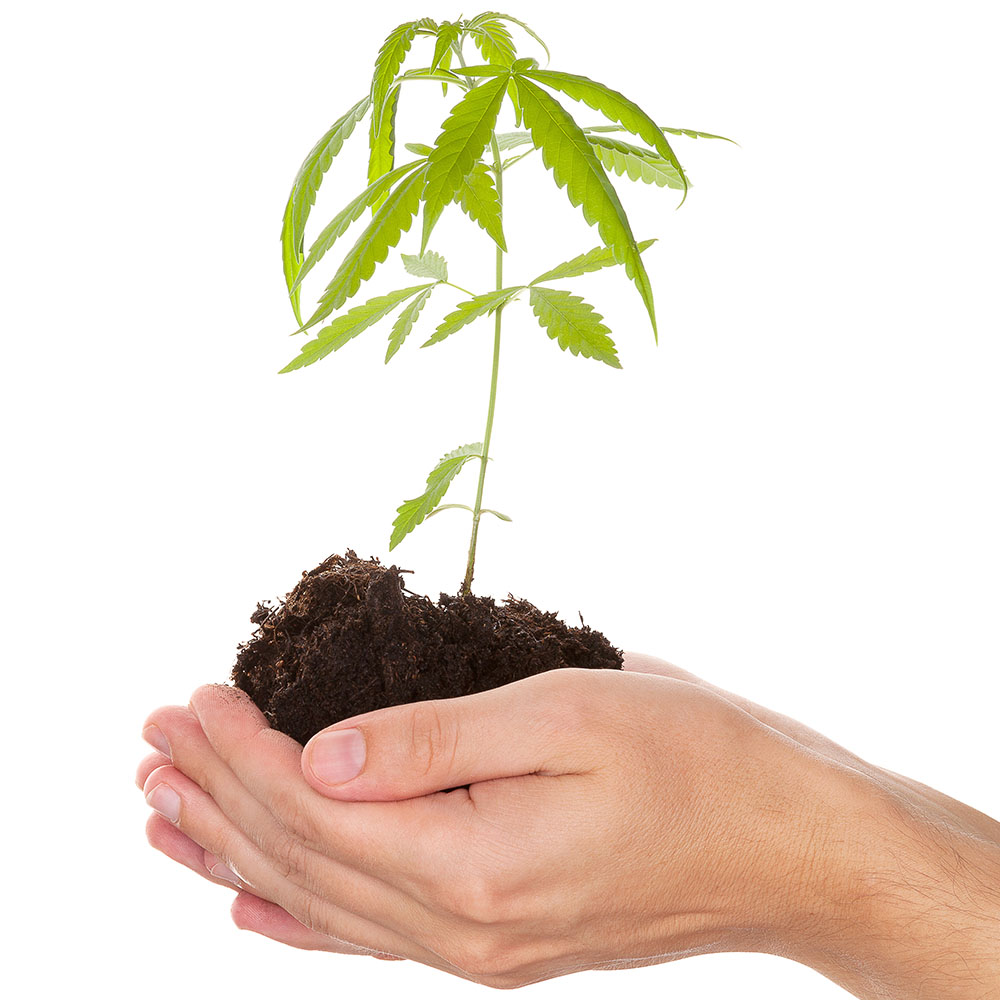 giving plants
