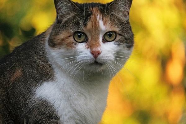 cat-967958_640