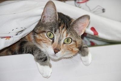 cat-278191_640